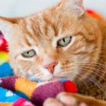 猫にとって最適な室温とは??部屋の温度管理の注意点と暑さ対策について。