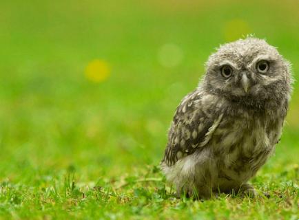 【最新版】フクロウの人気ランキング!種類や性格の特徴は??