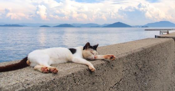 【猫の島】日本にある猫島観光スポット一覧まとめ。