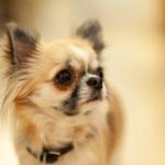 【犬の爪】伸びすぎは危険?見直すべき家の環境とは?